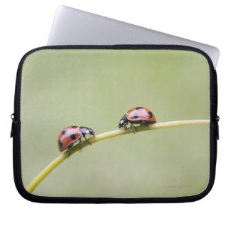Ladybugs on stem, Biei, Hokkaido, Japan Computer Sleeve