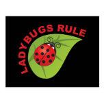 Ladybugs Rule Post Card