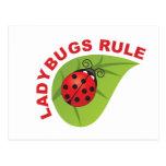 Ladybugs Rule Postcard