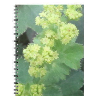 Lady's Mantle Flowers Spiral Notebook