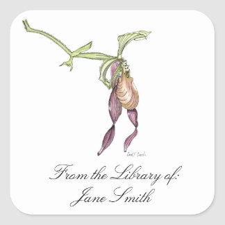 Lady's Slipper Orchid Book Plate