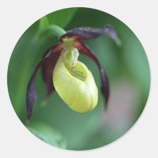 Ladys slipper Orchid Classic Round Sticker