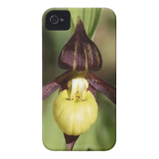Ladys slipper Orchid iPhone 4 Case-Mate Case