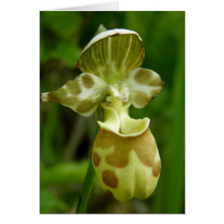 Lady's Slipper Orchid, Unalaska Island Card