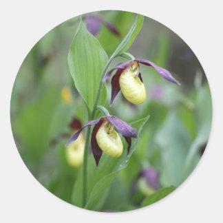 Ladys slipper Orchids (Cypripedium calceolus) Classic Round Sticker