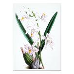 Laelia Albida, var Rosea de la orquídea Invitación 12,7 X 17,8 Cm