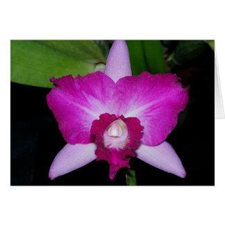 Laeliocattleya orchid hybrid card
