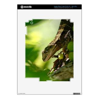 Lagarto australiano que oculta entre las hojas, pegatinas skins para iPad 3