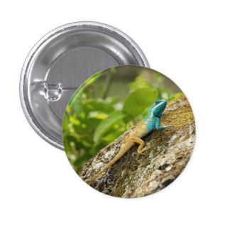 Lagarto Azul-Con cresta Calotes Mystaceus Pin Redondo De 1 Pulgada