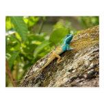 Lagarto Azul-Con cresta Calotes Mystaceus Postal