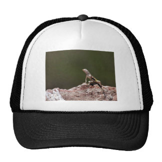 Lagarto Cebra-atado occidental Gorros Bordados