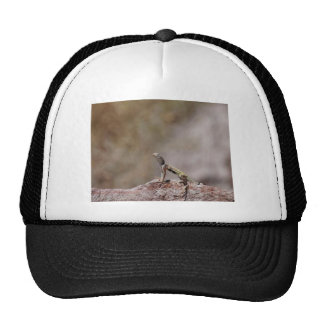 Lagarto Cebra-atado occidental Gorra