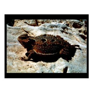 lagarto Cortocircuito-de cuernos Postal