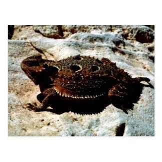 lagarto Cortocircuito-de cuernos Postales
