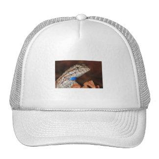 Lagarto de cerca gorras de camionero