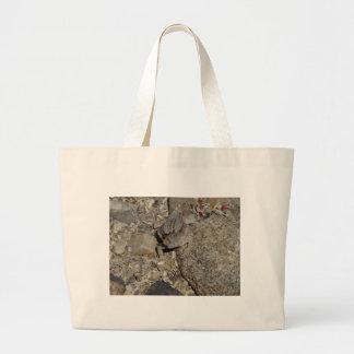 Lagarto de cuernos bolsa
