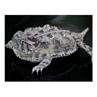 Lagarto de cuernos de Tejas - reptil del estado de Postal