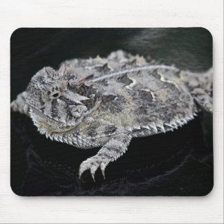 Lagarto de cuernos de Tejas - reptil del estado de Tapete De Raton