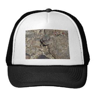 Lagarto de cuernos gorras de camionero