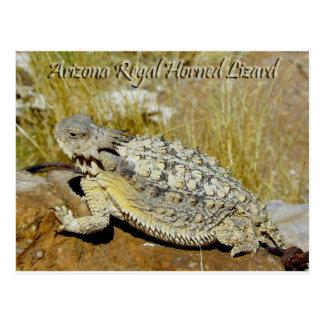 Lagarto de cuernos real de Arizona Postales