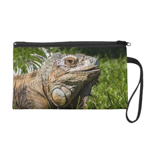 Lagarto de la iguana