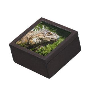 Lagarto de la iguana cajas de joyas de calidad