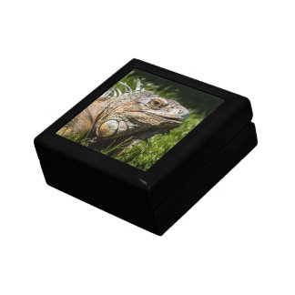 Lagarto de la iguana cajas de joyas