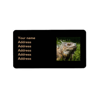 Lagarto de la iguana etiquetas de dirección