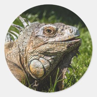 Lagarto de la iguana etiqueta redonda