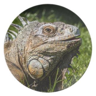 Lagarto de la iguana platos de comidas