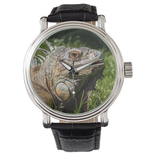 Lagarto de la iguana reloj