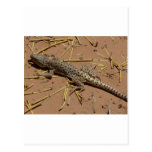 lagarto del desierto postal