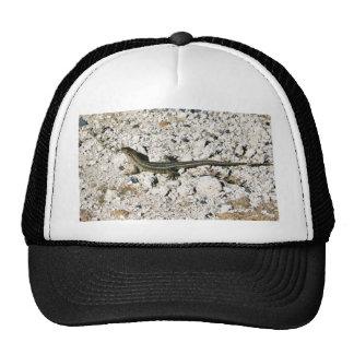 Lagarto del Gecko Gorras
