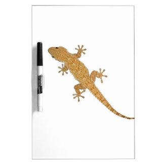 lagarto del gecko pizarra blanca