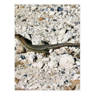 Lagarto del Gecko Postales