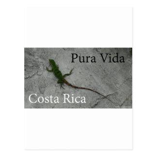 ¡Lagarto en la pared de piedra en Costa Rica Pura Tarjetas Postales