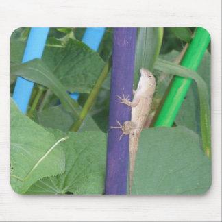 Lagarto en las plantas alfombrilla de raton