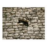 Lagarto en una ruina maya tarjeta postal