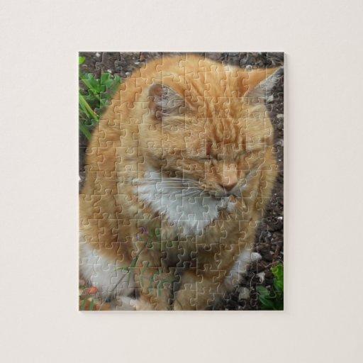 Lagarto, gato de tigre anaranjado rompecabezas con fotos