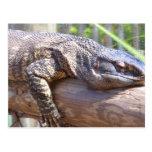 lagarto grande en cierre del registro para arriba postal