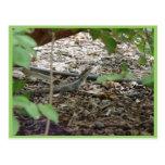 Lagarto hermoso en hojas secas tarjeta postal