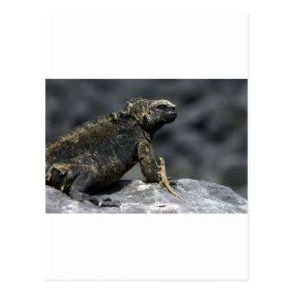 Lagarto las Islas Galápagos de la iguana marina y