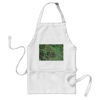 lagarto negro en la planta de lámina de la Florida Delantal