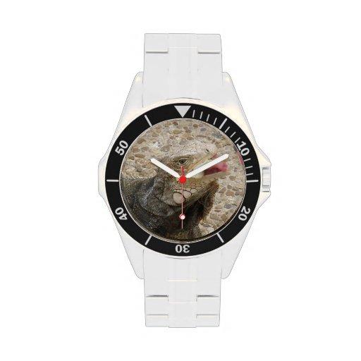 Lagarto Reloj