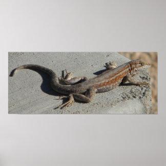 lagarto sabio del cepillo de las dunas póster