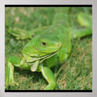 Lagarto verde del arrastramiento impresiones