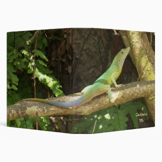 Lagarto verde jamaicano