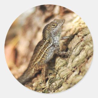 Lagartos de los lagartos de los lagartos pegatina redonda