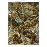 Lagartos del vintage, Lacertilia de Ernst Haeckel Tarjetón