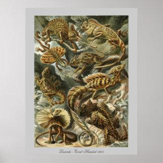 Lagartos - Ernst Haeckel Póster